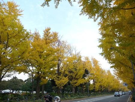 12.11/29 紅葉 山下公園通り (30)