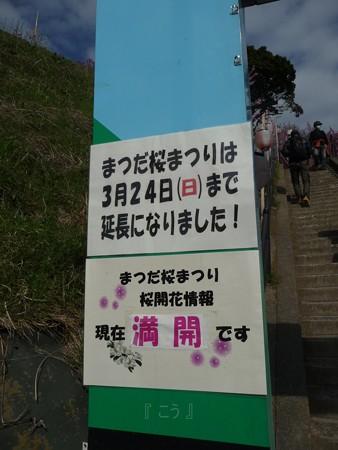 130311-松田山 河津桜 (5)