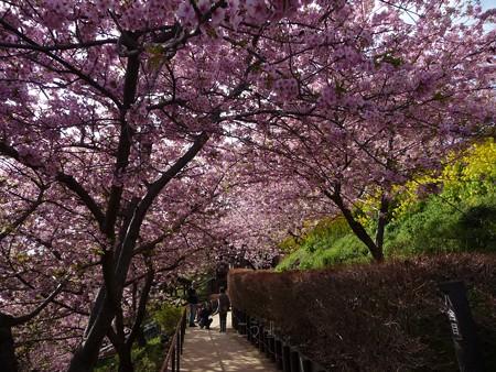 130311-松田山 河津桜 (93)
