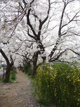 130329-大和 千本桜 (5)