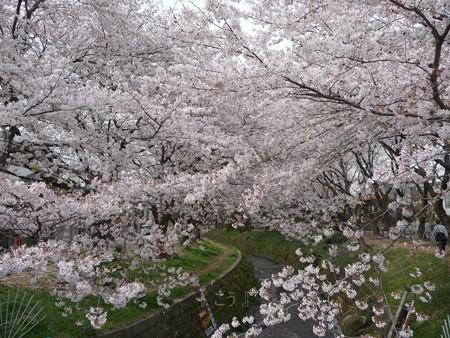 130329-大和 千本桜 (24)