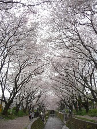 130329-大和 千本桜 (33)