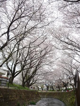 130329-大和 千本桜 (34)