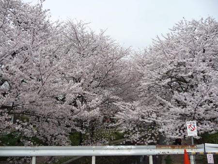 130329-大和 千本桜 (40)