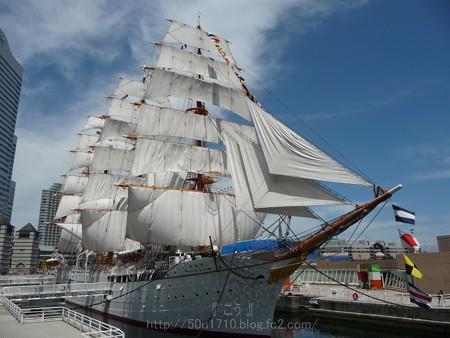 130715-帆船日本丸 総帆展帆 (17)