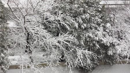 140214-雪 (1)