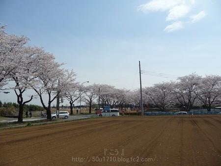 140401-桜 海軍道路 (63)