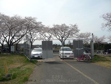 140401-桜 海軍道路 (121)
