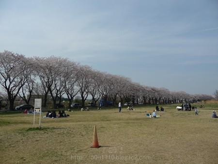 140401-桜 海軍道路 (122)