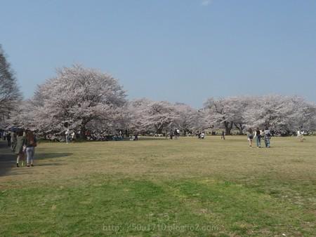 140408-昭和記念公園 (17)
