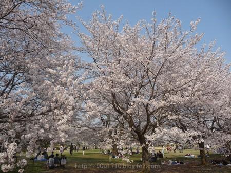 140408-昭和記念公園 (18)