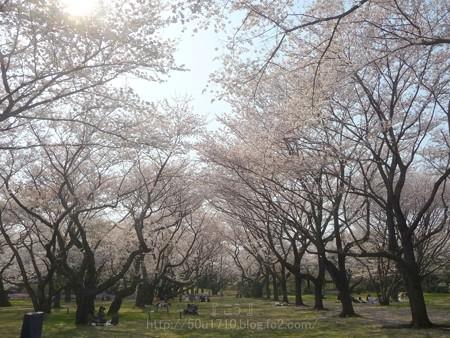 140408-昭和記念公園 (30)