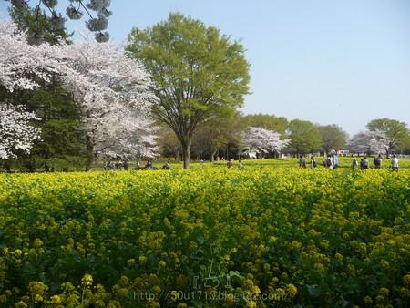 140408-昭和記念公園 (53)