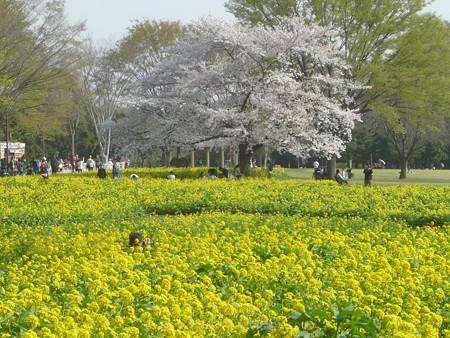 140408-昭和記念公園 (64)