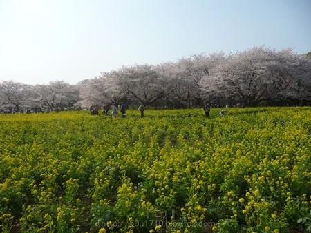 140408-昭和記念公園 (83)