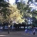 公園の午後