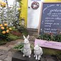 国バラガーデニング ウサギ