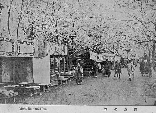 40向島の桜s