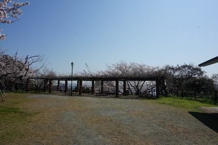 【さくら満開 写真】西公園 桜 福岡 2014年3月28日撮影 (39)