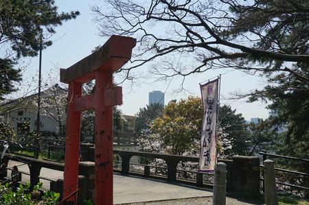 【さくら満開 写真】西公園 桜 福岡 2014年3月28日撮影 (42)