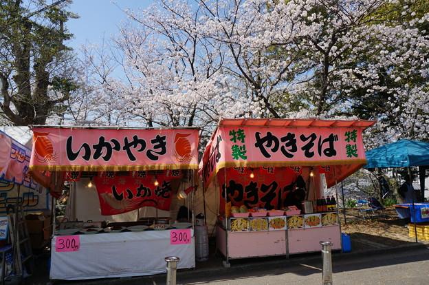【さくら満開 写真】西公園 桜 福岡 2014年3月28日撮影 (77)