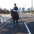 Photos: 皇宮警察騎馬隊