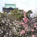 Photos: 大阪城公園 梅の花