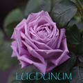 ルグドゥナム