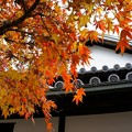 Photos: 下津井(岡山)廻船問屋 中庭の紅葉