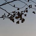 Photos: LR-20131208_171609