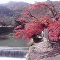 Photos: 嵐山来ちゃった…紅葉がめっ...