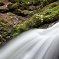 苔と水の流れ