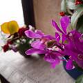 Photos: 玄関の花