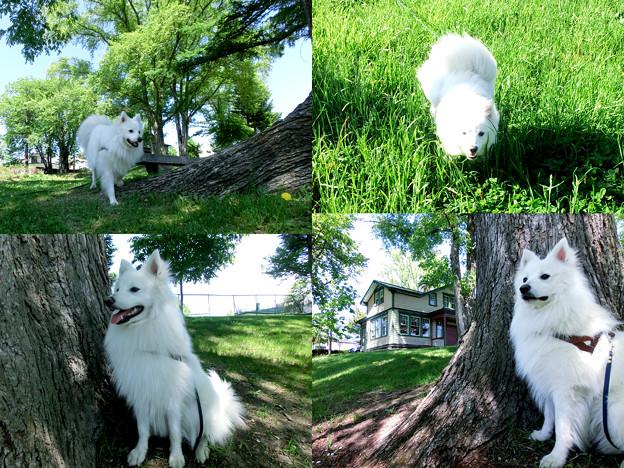 昼_ ピアソン公園の木陰で・・・