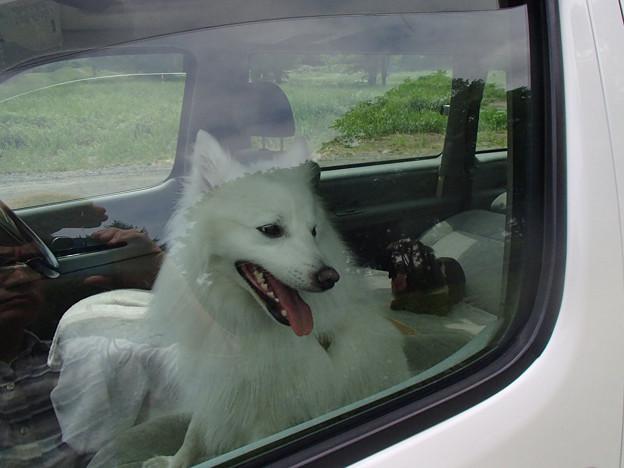 暑いから車で涼しいとこまで・・・