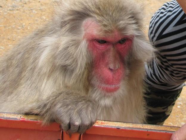 雌猿と私 {2010年4月19日}