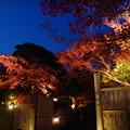 Photos: 門を彩る紅葉
