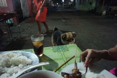 飯目当てに犬が