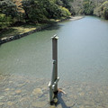 宇治橋から五十鈴川を見る IMG_6216_2