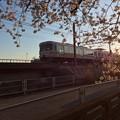 桜とJR東海313系