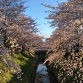 春日井市高蔵寺町の桜