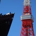 写真: 増上寺からの東京タワー (港区芝公園)