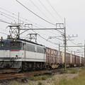 Photos: _MG_4656 EF65 2096牽引の貨物列車(列番不明)