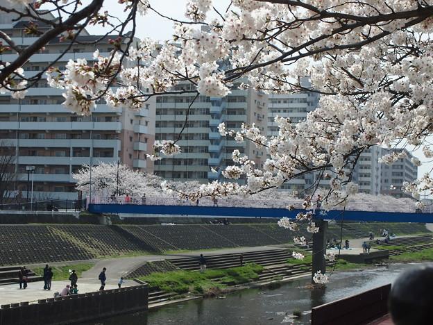 Photos: 川へと
