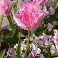 Photos: ベルサイユの薔薇