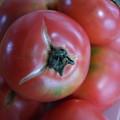 写真: 夏!完熟トマト
