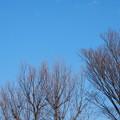 Photos: 青空と枯れ木