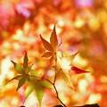 Photos: 秋の日差しの中で。