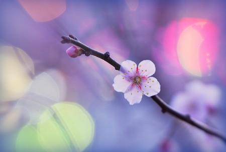 街の灯りがとても綺麗ねヨコハマ、と梅がつぶやく。