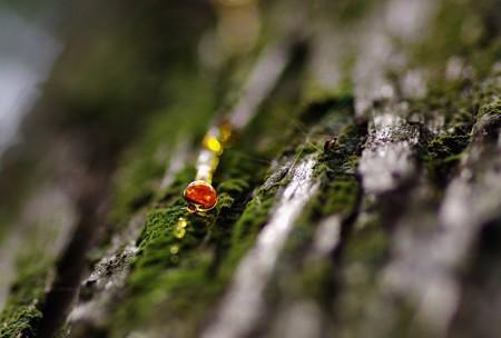 森の宝石。